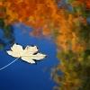 Poezie podzimu